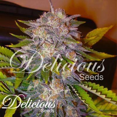 delicious seeds caramelo