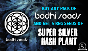 Bodhi Seeds Promotion