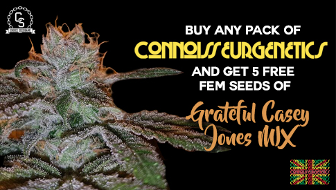 Connoisseur Genetics Seeds Promotion