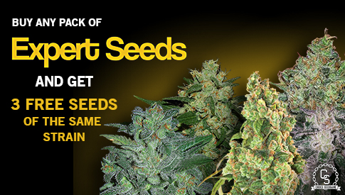Expert Seeds Promotion