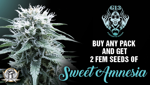 G13 Labs Promotion