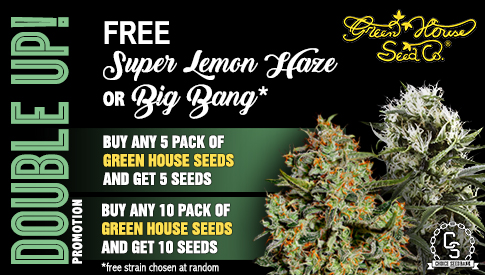 DOUBLE UP! Green House Promotion