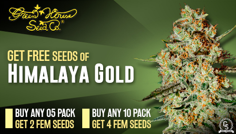 Green House Seeds Promotion