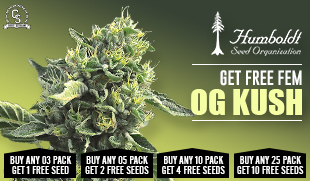 Marijuana seeds promotions