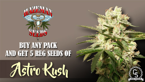 Hazeman Seeds Promotion