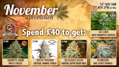 Choice November Promotion