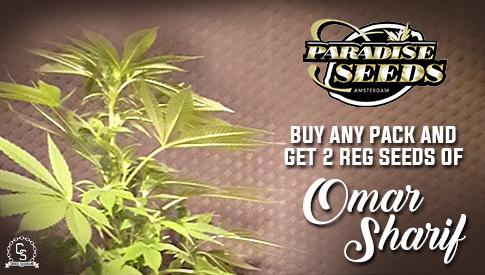 The Choice Seedbank - Buy Cannabis Seeds Online | Best