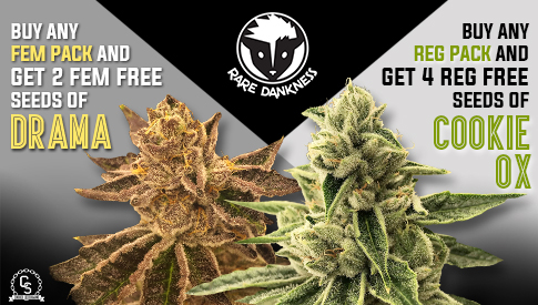 The Choice Seedbank - Buy Cannabis Seeds Online | Best