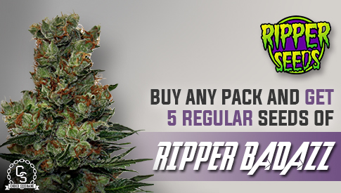 Ripper Seeds Promotion