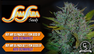Samsara Seeds Promotion