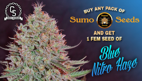 Sumo Seeds Promotion