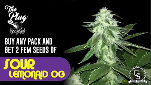 The Plug Seedbank Promotion