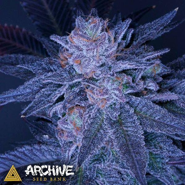 Archive Seeds Grimace OG