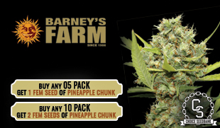 Barneys Farm Promotion