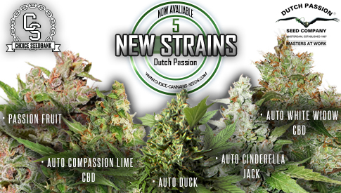 New Strains by Dutch Passion