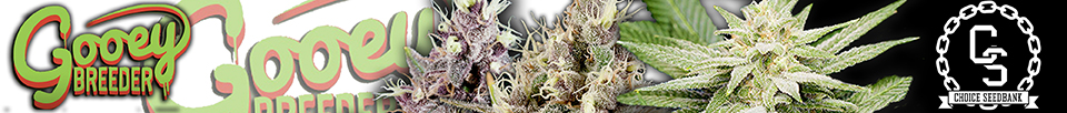 Gooeybreeder Seeds