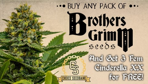 Brothers Grimm Promotion