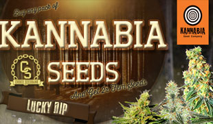 Kannabia Seeds Promotion