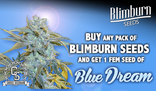 BlimBurn Promotion