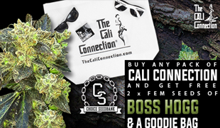 Cali Connection Promo