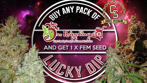 the choice seedbank   buy cannabis seeds online best