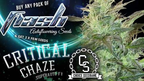 Flash Seeds Critical Chaze Promo
