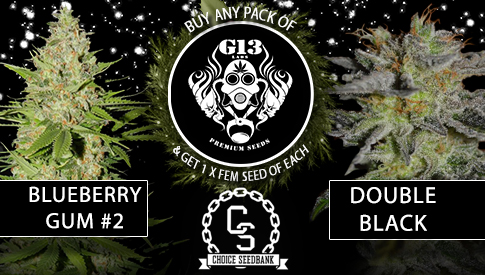the choice seedbank   buy cannabis seeds online best