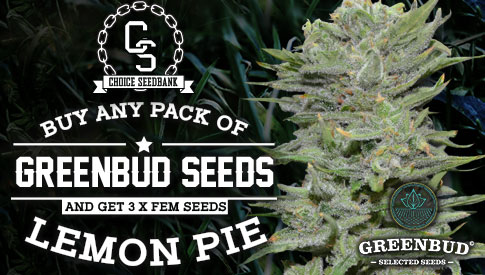 Greenbud Seeds Promotion