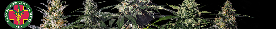 Medical Marijuana Genetics Seeds