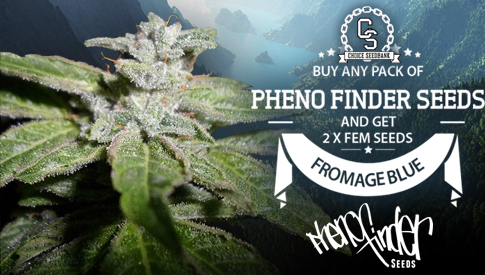 pheno Finder Fromage Blue