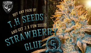 T.H. Seeds Promotion