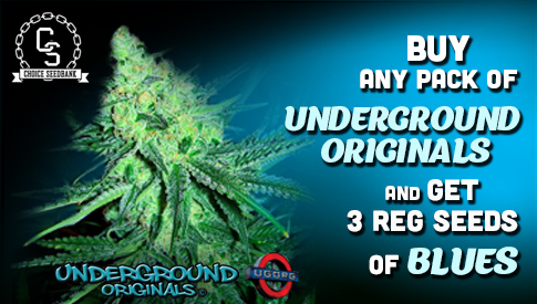 Underground Original Seeds Promotion
