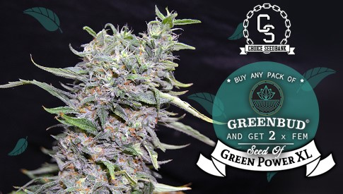 Greenbud Seeds Green Power XL Promotion