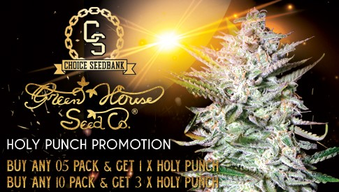 Green House Holy Punch Promotion