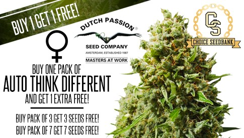 Dutch Passion Think Different Promotion