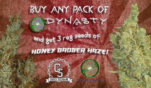 Dynasty Genetics Promotion