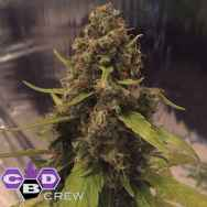 CBD Crew Seeds 3D AKA 3 Districts