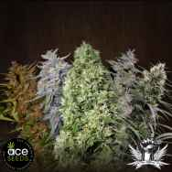 ACE Seeds Ace Mix