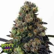 Ripper Seeds Acid Dough
