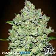 Advanced Seeds AUTO BioDiesel Mass
