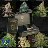 T H Seeds 25th Anniversary Limited Edition Box Special Set