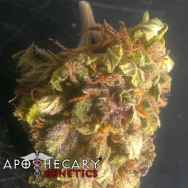 Apothecary Genetics Seeds Ape Berry OG
