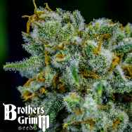 Brothers Grimm Seeds Apollo Eleven