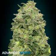 Advanced Seeds Auto Afghan Skunk