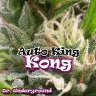 Dr. Underground Seeds Auto King Kong