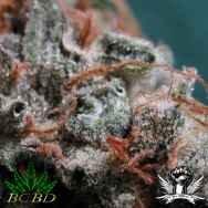 BC Bud Depot Seeds Sweet God
