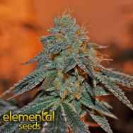 Elemental Seeds Berry Bomb