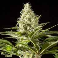 Philosopher Seeds Black Bomb