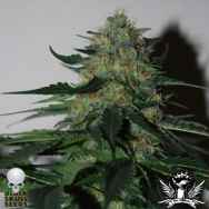Black Skull Seeds Pineapple Gum