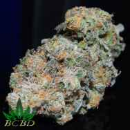 BC Bud Depot Seeds Blue Dream